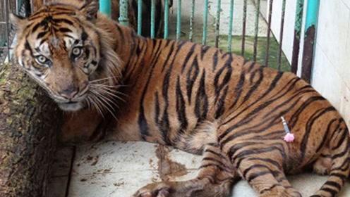 """世界上最""""残忍""""的动物园,动物全都濒临死亡,看完让人愤怒!"""