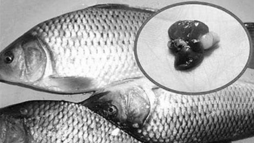 7岁女童生吃鱼胆中毒,送医院验出肝衰竭!都怪奶奶太无知