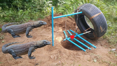 男子野外巧用轮胎捕抓科莫多巨蜥,镜头记录全过程,看完难以置信!