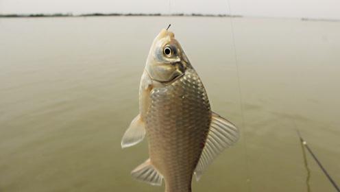 野钓200公里外的大湖,1小时上20多条鲫鱼,值吗