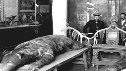 清朝有两只神秘怪兽,现收藏在沈阳故宫里,至今无人知晓是什么