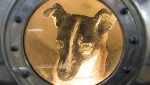 世界最悲惨的流浪狗,被选中登入太空,至今孤独的漂浮无法返回!