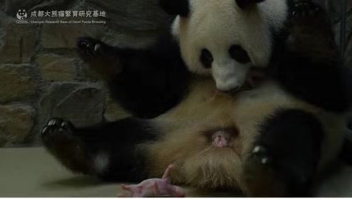 终于等到你!2019级迟到的熊猫两兄弟来报道啦