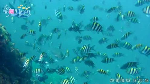 澎湖海钓,如何在雀鲷鱼群中钓白毛鱼,看看水底真是吓人,全是鱼