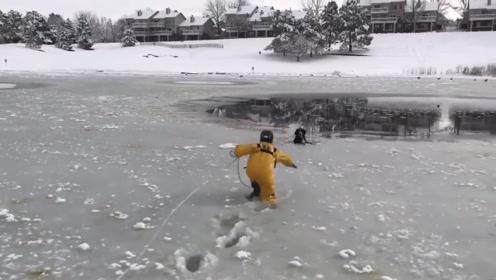 狗狗玩耍掉进冰窟窿,救援人员快速爬向狗狗,狗狗极其配合!
