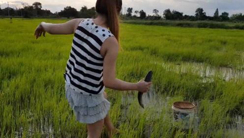 农村水田荒废多年,里面全是鱼,女孩徒手抓鱼,直呼太爽了