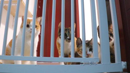 多猫家庭首次出现紧张气氛,小橘猫这次真的酸了