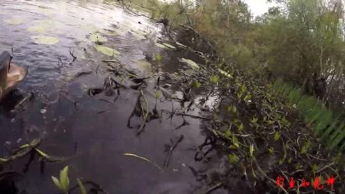 草塘路亚,大鱼猛拽的更猛,水面乱飞……