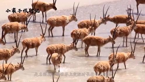 """世界上""""交配""""时间最长的动物,竟要21天!而且就在中国"""