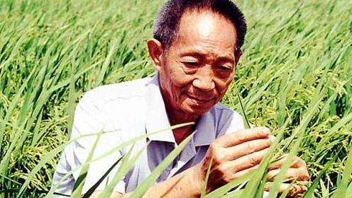 袁隆平呼吁关注海水稻:梦想多养活5亿人