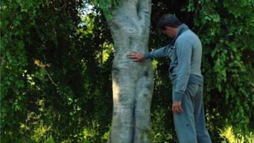 男子偶遇长得像人形的一棵树,好奇摸了一下,结果惹祸上了身