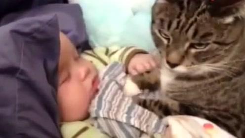 小猫咪看着小宝宝睡觉,接下来的举动太可爱!