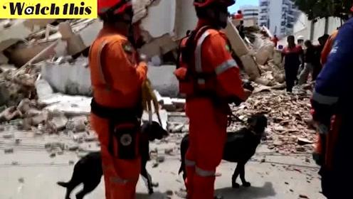 巴西7层高居民楼轰然倒塌 多人死亡失踪现场一片废墟
