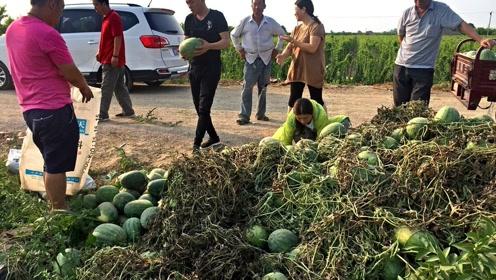 今年很多地区西瓜滞销,西瓜价格下跌的原因是什么?