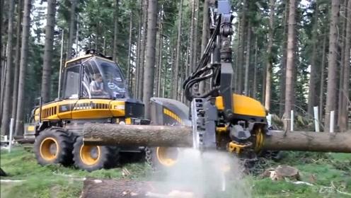 老外发明的这种伐木机械,功能也太强大了,看看什么叫效率惊人
