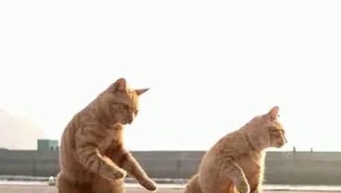两只橘猫天天跟着爷爷打太极,半年后,主人:来,露一手!