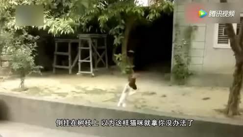 猴子很调皮逗猫!猫咪:长得又不帅!还要来撩本猫!一边玩去