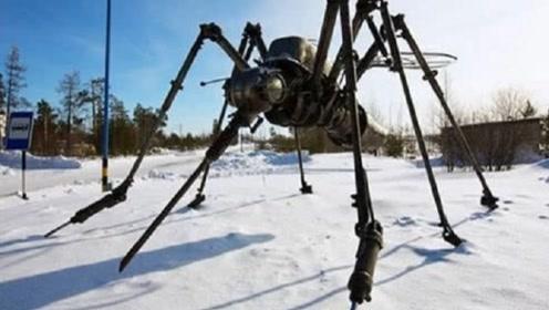 世界上最大蚊子的起源地,是在最冷的北极圈,蚊子难道已经不怕冷了?