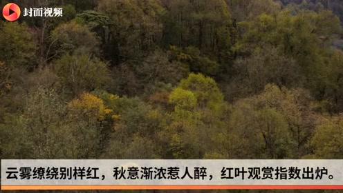 """今年首期红叶观赏指数发布 四川 这些地方""""红了"""""""