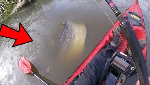 钓鱼:大鲶鱼的尾巴很有力气