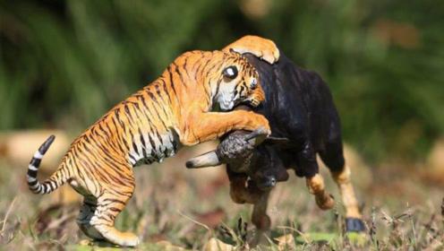 """老虎欲偷袭落单野牛,没想到""""牛魔王""""暴怒,老虎瞬间成病猫"""