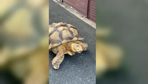 龟仙人可是很精致的老人和龟仙人一起散步真的好有爱啊!