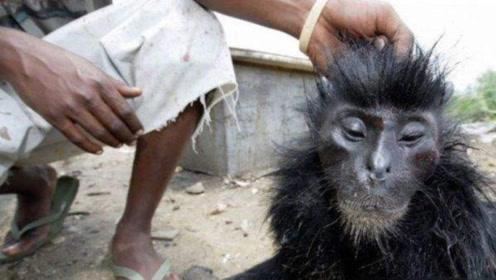 非洲人有多残忍!竟猎杀这种动物当食物,网友:这和吃人没区别!