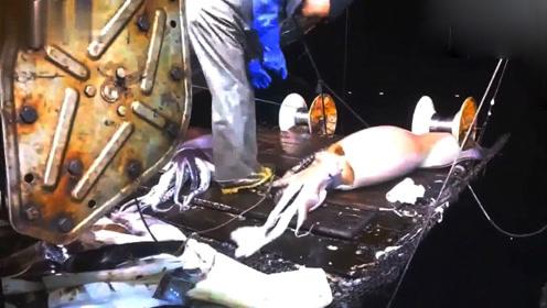 远洋钓鱿船作业画面,钓的都是十几斤的大鱿鱼!