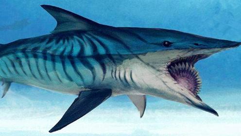 嘴巴像电锯一样的鲨鱼你见过吗?这种鱼真的存在!