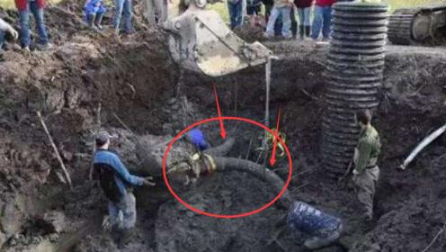 """老汉偶然挖出""""史前怪兽"""",拥有两米巨角,专家看到后脸色变了!"""