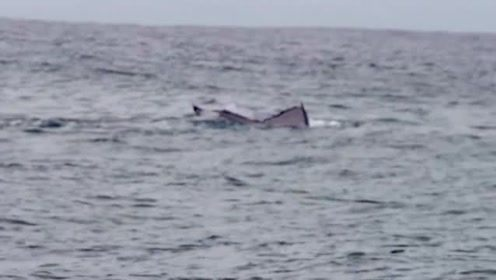 巨型鲸和人类冲浪画面,如果不是几百斤体重,不知道撒娇成啥样