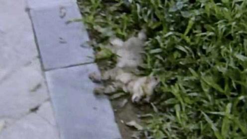深圳一小区多只宠物疑被毒死,物业:和消杀工作无关
