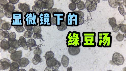显微镜放大绿豆汤是什么样子的?看完赶紧喝上一碗