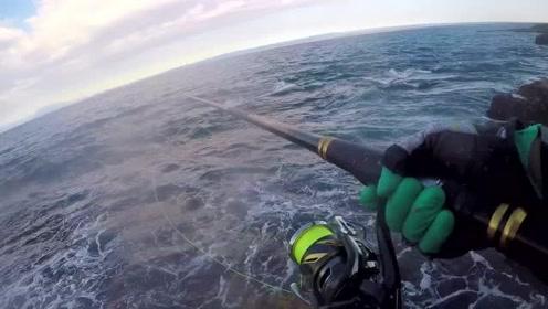 矶钓,黑毛鱼,鲹鱼,玳瑁石斑鱼,这种地方钓一个月都不腻