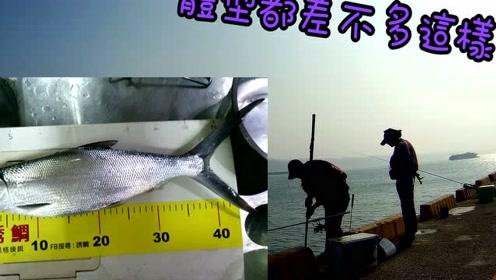 海钓矶钓,今天堤岸上有200多个钓鱼人,有点恐怖