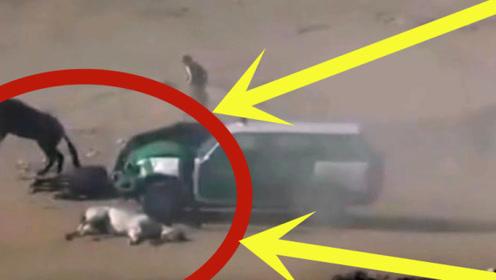 赛马场闯入越野车,车毁、人伤、马亡,场面太惨烈!