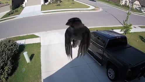 一只鸟儿未张开翅膀悬停在半空,男子百思不得其解,太不可思议
