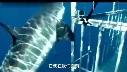 三男子潜入海底拍摄鲨鱼,发现近百条5米多长的大白鲨,场面壮观
