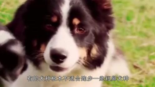 最伤狗的遛狗方式都有哪些?有些主人没注意,就把狗狗弄伤了