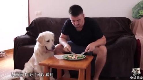 国外网友测试自己不在时,狗狗会不会偷吃桌子上的食物呢
