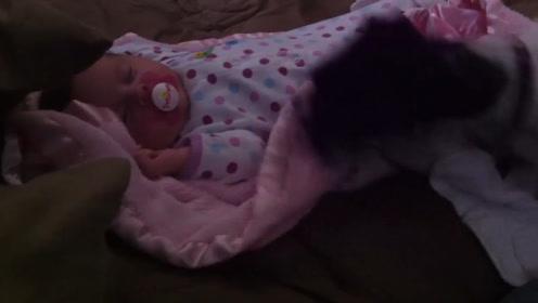小宝宝睡着没盖被子,接下来边上狗狗的举动让网友直呼太暖心