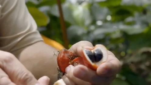 世界上最甜的水果,产于非洲西部,甜度是糖的3000倍!