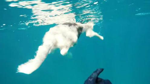 鲨口脱险!澳大利亚一宠物狗险落鲨鱼口 幸被营救