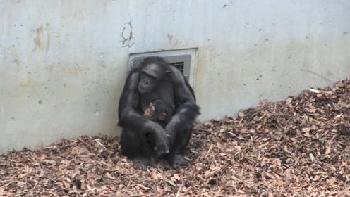 小猩猩触电,妈妈立马抱住大叫,全家人安抚,独生子就是不同