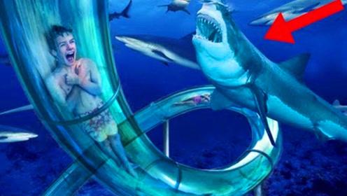全球最刺激的水上滑梯,要从鲨鱼群中穿过,太好玩了