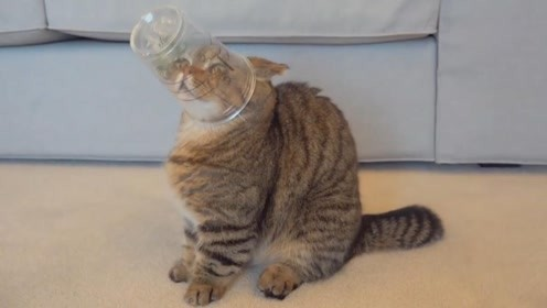 把猫粮放到星巴克的杯子里,看看小猫咪用什么办法把它取出来?