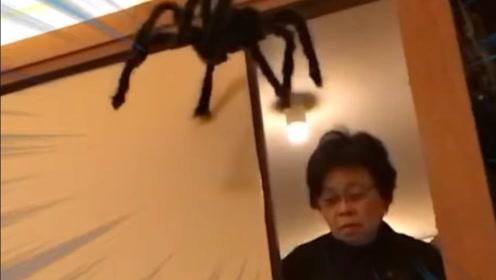 日本小哥钟爱整蛊自己天然呆奶奶 大蜘蛛入侵奶奶迷之反应