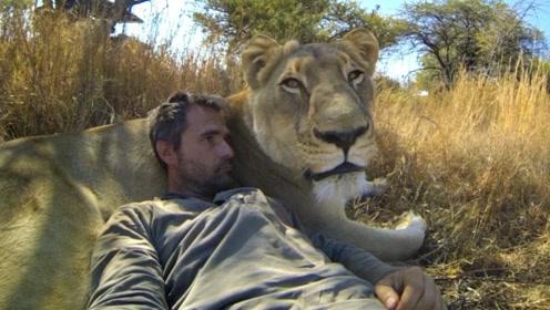 男子捡到幼狮养大,再次见面场面让人意想不到,动物的情感不比人差