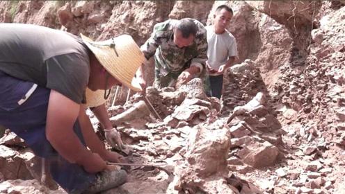 重大发现!甘肃永靖再次发现巨龙形类恐龙骨骼化石