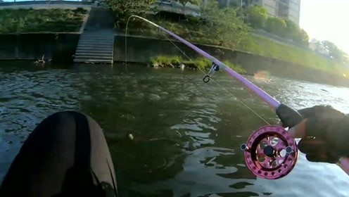 前打钓鱼,蚯蚓万能饵,福寿鱼狂上钩,停不下来